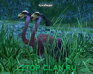 Kookaburra npc, Кукабарра ygc